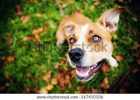 adorable dog in a park - stock photo