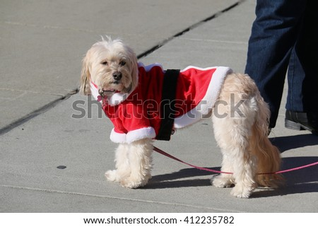 Adorable Dog in Santa Claus Costume