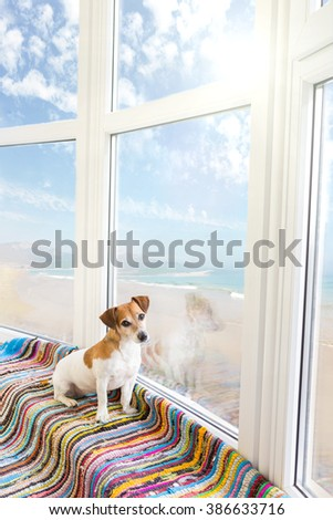 Adorable Dog relaxed in apartment with sea views big windows. Puppy basking in the summer sunshine windowsill and beach - stock photo