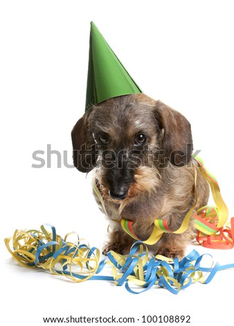 Adorable dog with a party hat and party streamers - stock photo
