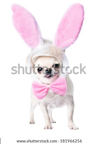 adorable dog with funny pink hare ears and bow tie isolated
