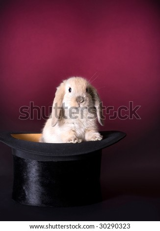 Adorable easter rabbit in a magician's hat - stock photo
