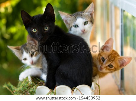 adorable family of colorful kittens in a pot - stock photo
