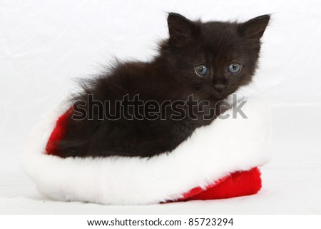 Adorable, fluffy, black kitten in a santa hat - stock photo