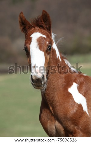 Adorable foal looking - stock photo