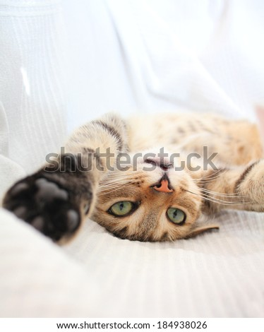 Adorable funny playful cat  - stock photo