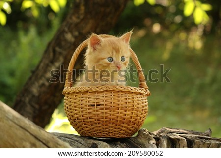 Adorable ginger kitten sitting in the basket in summer - stock photo