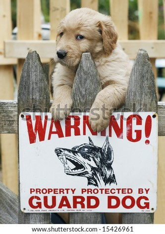 """adorable golden retriever puppy on fence with sign """"warning...property protected by guard dog"""" - stock photo"""