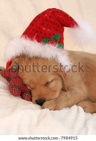 adorable golden retriever puppy sleeping with santa hat, leaning on plaid toy - stock photo