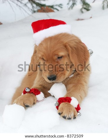 adorable golden retriever puppy with santa hat sitting in hole in snow with snowball - stock photo