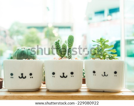 Adorable indoor cactus garden. - stock photo