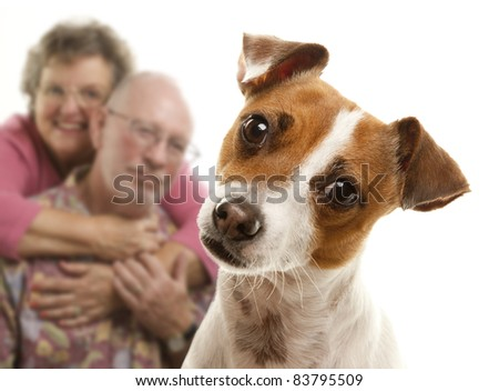Adorable Jack Russell Terrier and Adoring Senior Couple Behind Isolated on a White Background. - stock photo