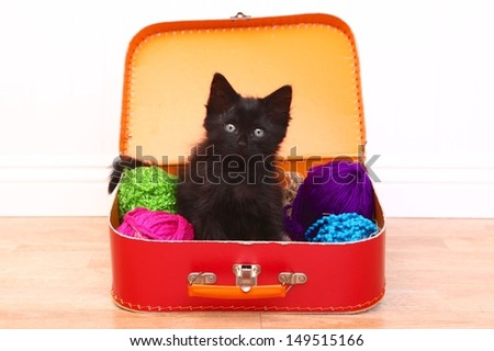Adorable Kitten in a Case Filled with Yarn - stock photo