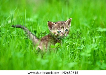 Adorable kitten in the grass