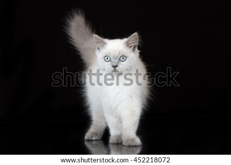 adorable kitten standing on black background - stock photo