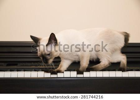 Adorable kitten walks on the piano keys - stock photo