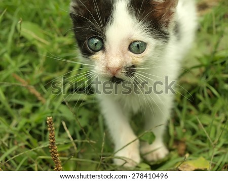 Adorable kitten with beautiful eyes on grass
