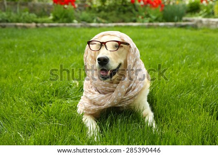 Adorable Labrador in glasses and scarf lying on green grass, outdoors - stock photo