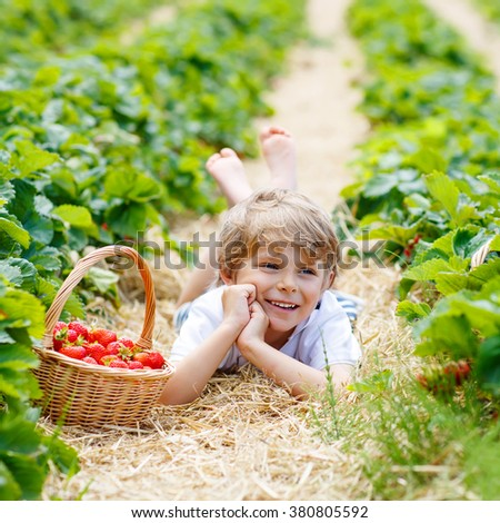 Adorable little blond kid boy picking and eating strawberries on organic bio berry farm in summer, on warm sunny day. Harvest fields in Germany. Healthy food for children. - stock photo