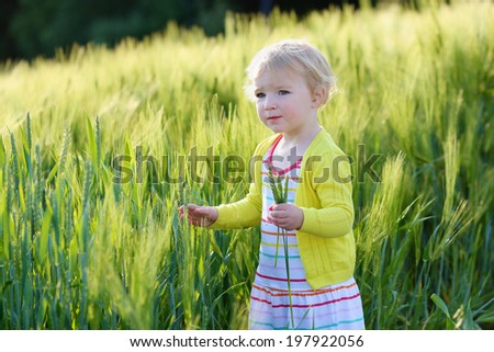 Adorable little child, blonde curly toddler girl, playing outdoors in wild green wheat field on a sunny summer day