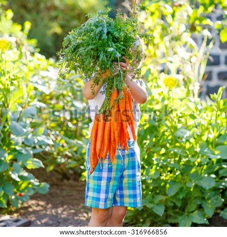 Adorable little child with carrots in domestic garden. Kid gardening outdoors. Healthy organic vegetables for kids - stock photo