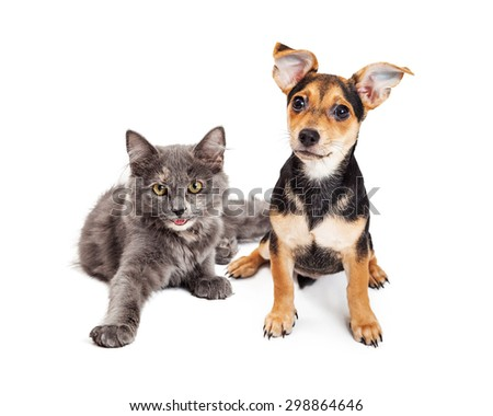 Adorable little happy kitten and mixed breed puppy dog together on a white background - stock photo