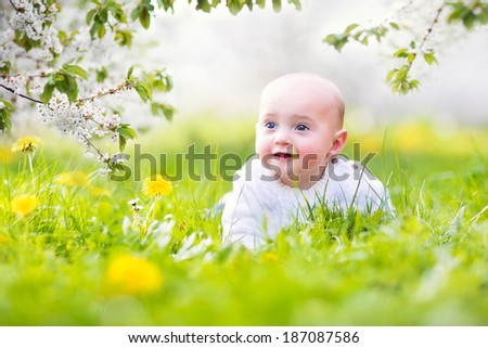 Adorable little happy smiling baby boy playing in a blooming apple garden between beautiful trees with white flowers on green grass with yellow dandelions on a sunny spring day - stock photo