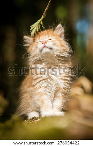 Adorable little red kitten with closed eyes - stock photo