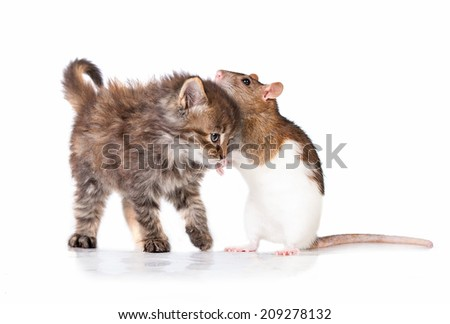 Adorable little tabby kitten with a rat - stock photo