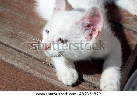 Adorable little white kitten close up portrait.