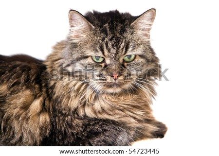 Adorable long haired cat on white background