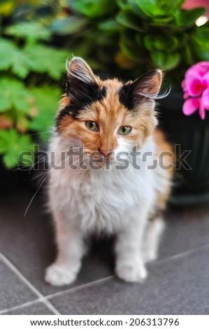 adorable maine coon kitten in a garden - stock photo