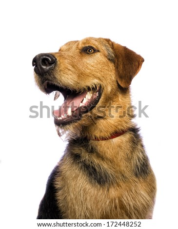 Adorable mixed breed dog looking do the side begging isolated on white background