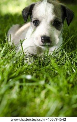 Adorable mixed breed puppy lying in the grass. - stock photo