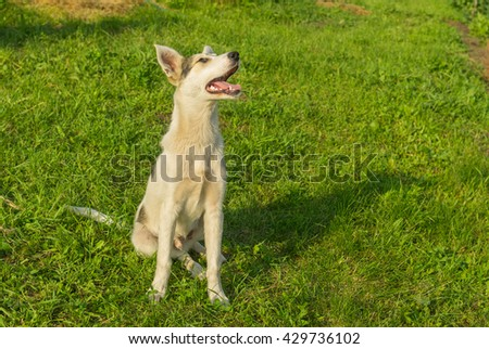 Adorable mixed breed young dog looking up while sitting on the grass - stock photo