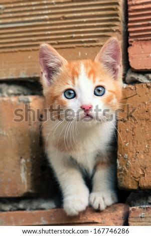 Adorable orange-white kitten with blue eyes - stock photo