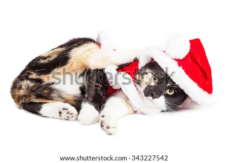 Adorable playful little kitten laying over white wearing Christmas Santa Claus outfit