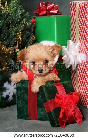 Adorable puppy in Santa suit with presents - stock photo