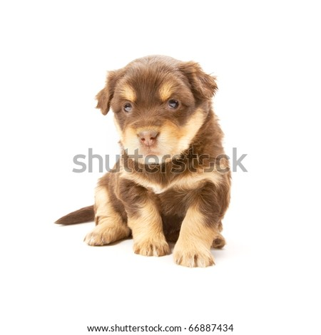 Adorable puppy isolated on a white background - stock photo