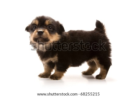 Adorable puppy isolated on white - stock photo