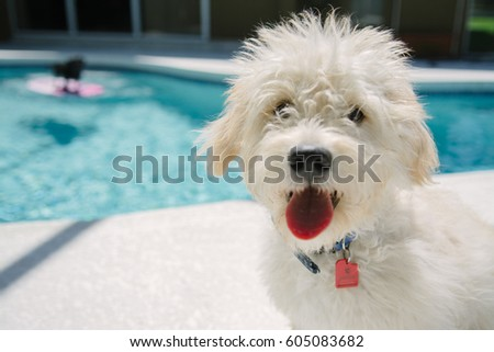 Adorable Puppy Playing by the Pool