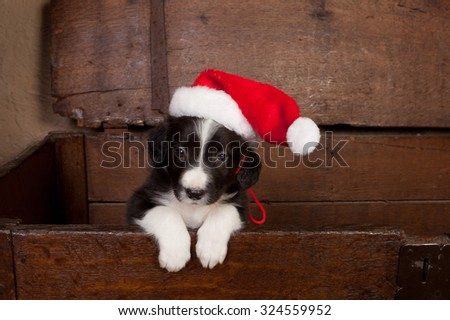 Adorable puppy wearing a santa hat in an antique wooden chest - stock photo