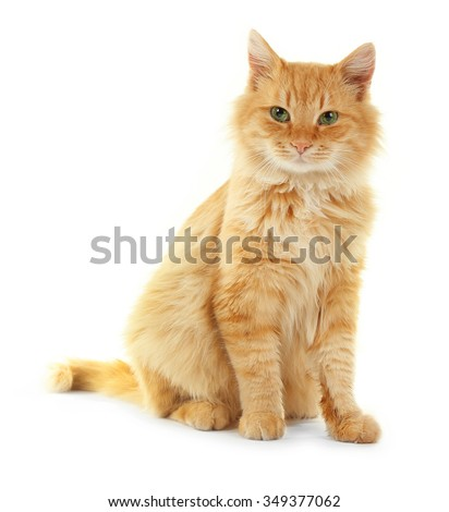 Adorable red cat isolated on white background - stock photo