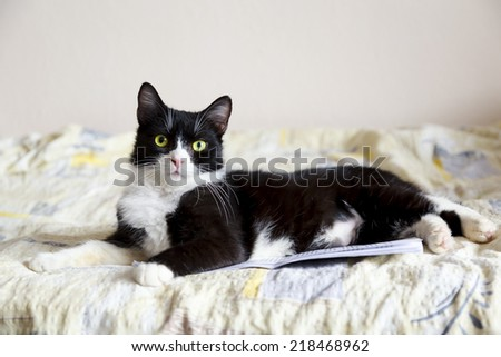 Adorable short hair black and white cat lying in bed on a pile of documents. - stock photo