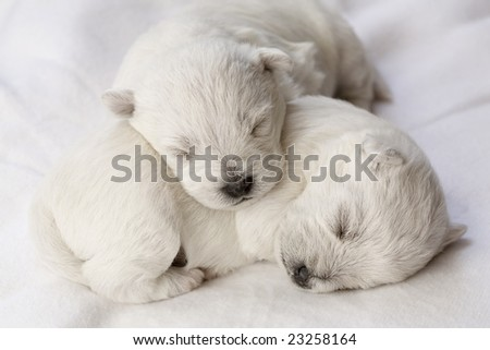 Adorable sleeping puppies, only a few days old - stock photo