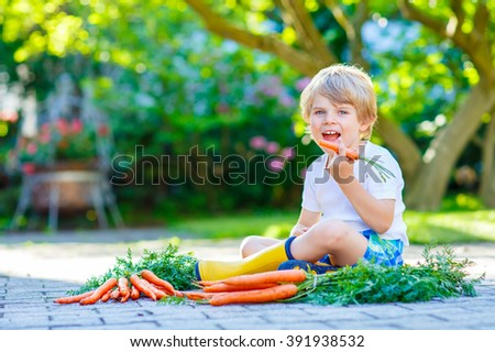 Adorable smiling kid boy eating and picking carrots in domestic garden. child gardening outdoors. Healthy organic vegetables as snack for kids and kindergarten children - stock photo