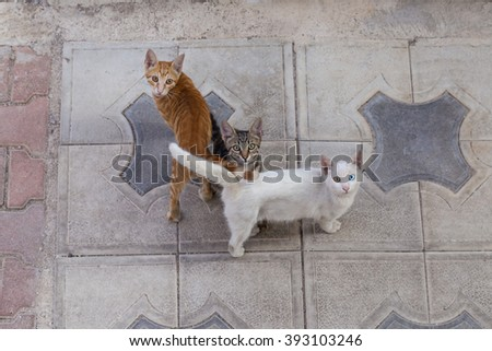 Adorable Street Cats with Beautiful Eyes  - stock photo