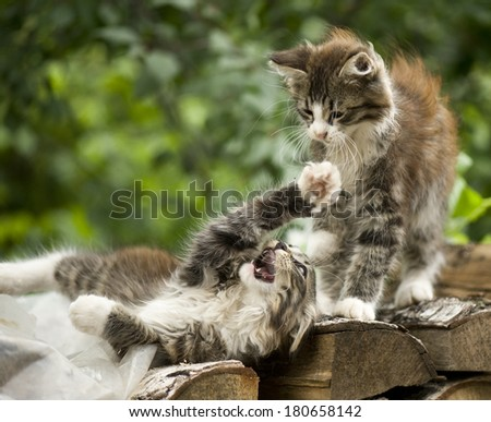 Adorable tabby kitten - stock photo