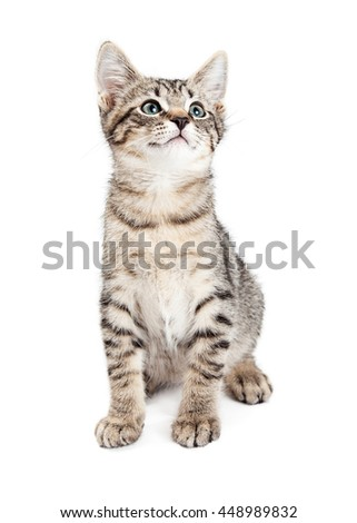 Adorable tabby kitten sitting down on white looking up