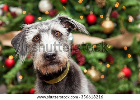 Adorable terrier mixed breed dog in front of a decorated Christmas tree with room on the right for text - stock photo